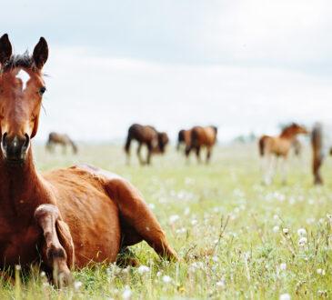 Pferd mit Fellproblemen