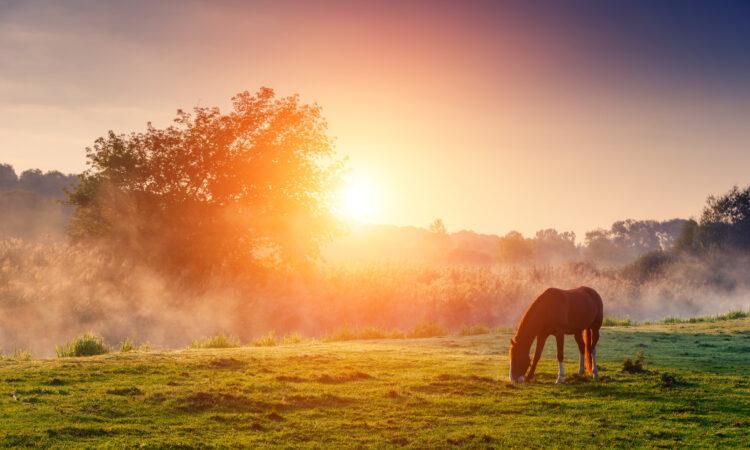 Grasendes Pferd auf der Herbstweide im Sonnenaufgang