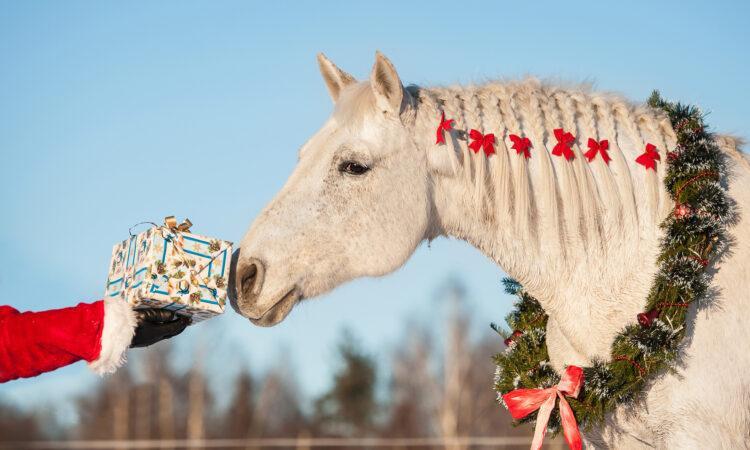 Weißes Pferde bekommt einen Weihnachtsgeschenk