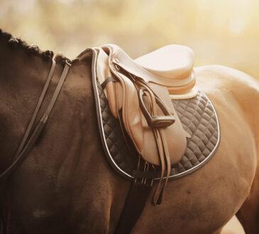 Braunes Pferd mit einem braunen Sattel