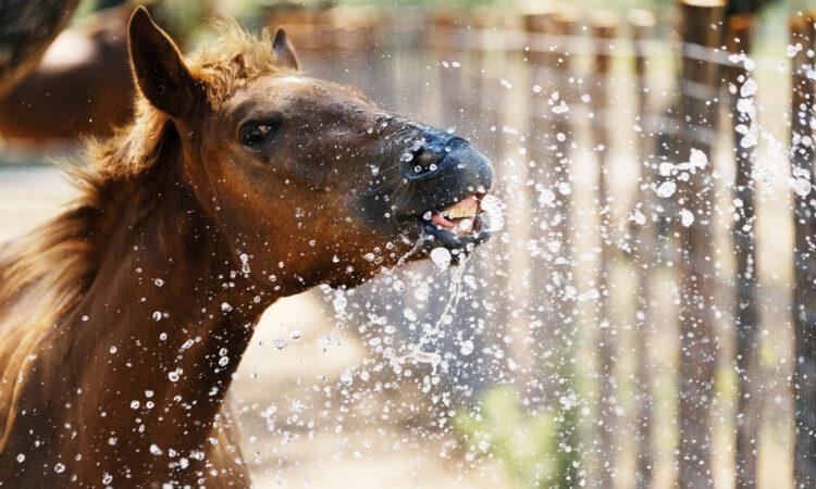 Fohlen spielt mit Wasser
