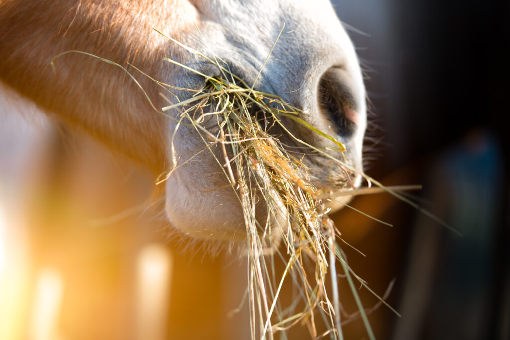 Pferdemaul gefüllt mit Heu