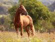 Sportliches Pferd steht auf einer trockenen Weide