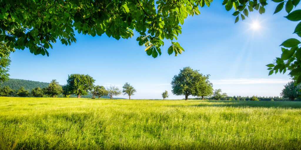 Grüne Wiese für Pferde mit verschieden Bäumen