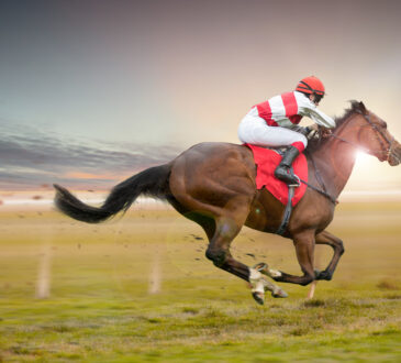 Magengeschwüre nicht nur bei Rennpferden