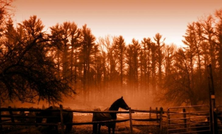 4651325-horse-farm-wallpapers