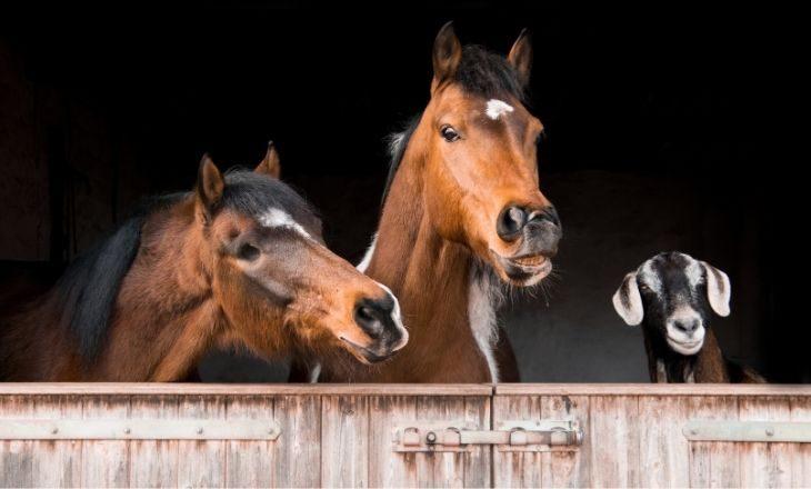 Checkliste Stall Pferd allgemein