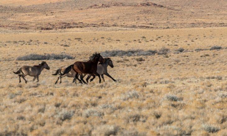 Gebrauchsanweisung für Mustangs