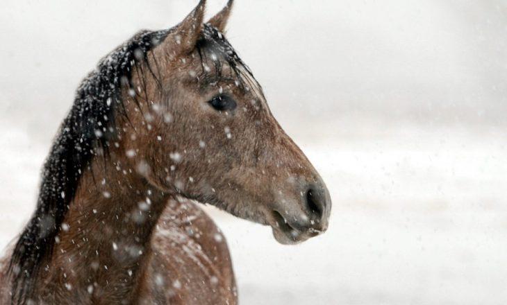 Pferd Winter