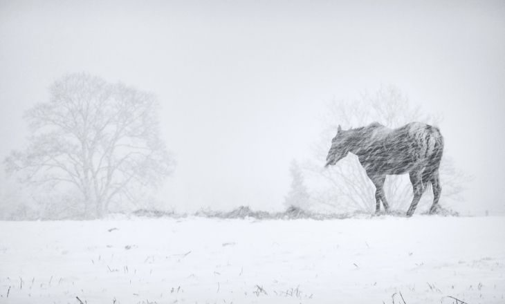 Pferde schützen bei Sauwetter