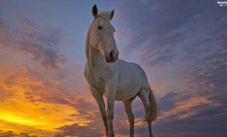 beautiful-views.net-sun-west-horse