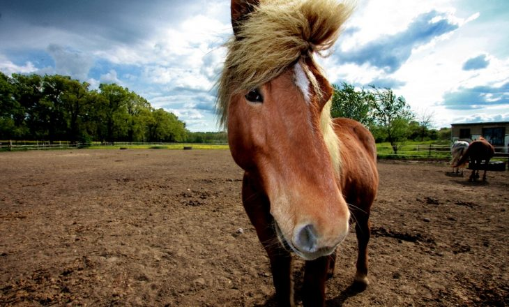 brown_horse_summer_time_animals-AAh