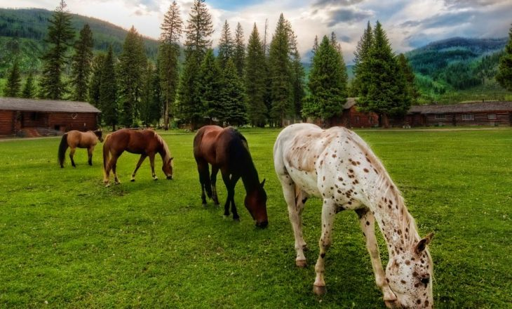 four_horses_grazing_country_background_wallpaper_-_1024x768