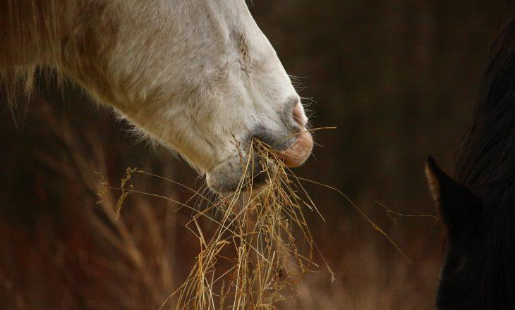 horse-1110304_1920