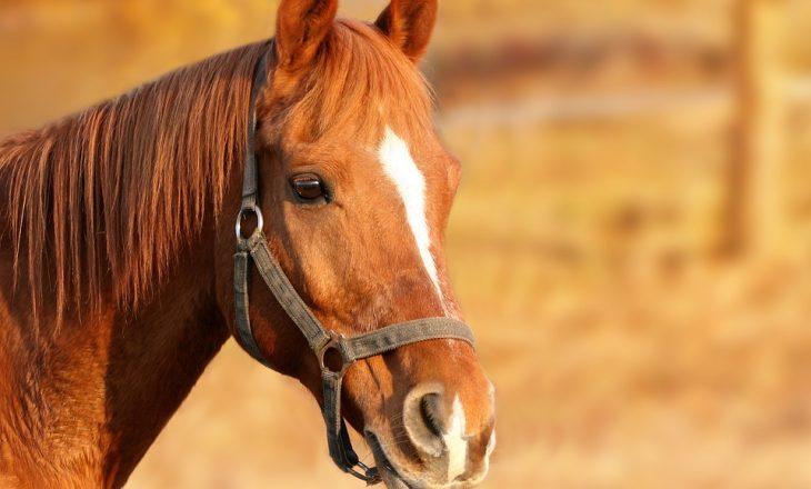horse-1201143_960_720