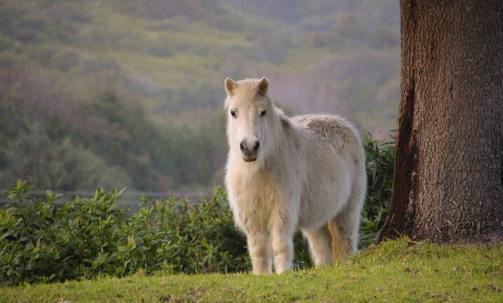 pony-2456757_960_720